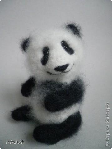 Панда фото 10