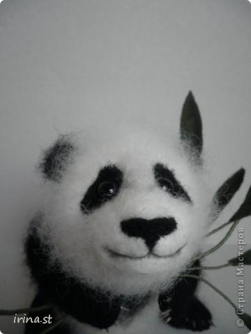 Панда фото 4