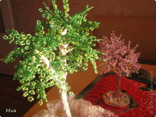 Второе деревце - березка фото 2
