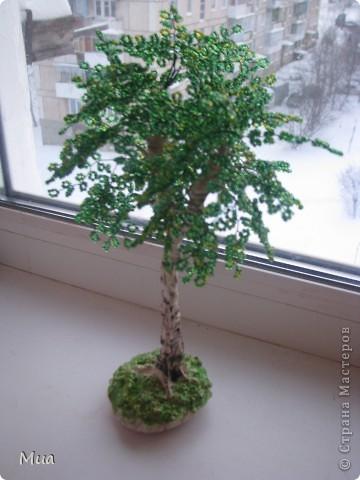 Второе деревце - березка фото 3