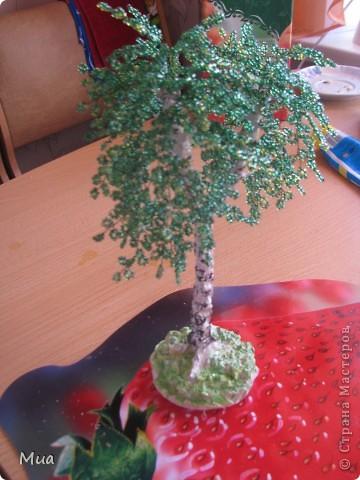 Второе деревце - березка фото 4