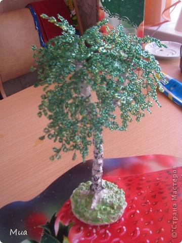 Второе деревце - березка фото 1