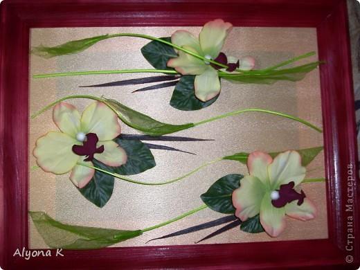 Хризантема фото 5
