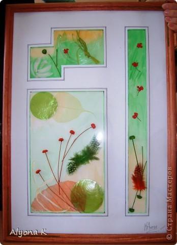 Хризантема фото 8