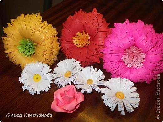 Мои первые цветочки фото 1
