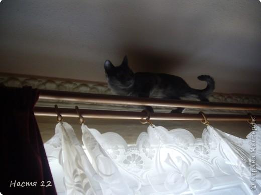 Это моя кошка Туся.Она любит прыгать ,бегать и скакать. фото 1