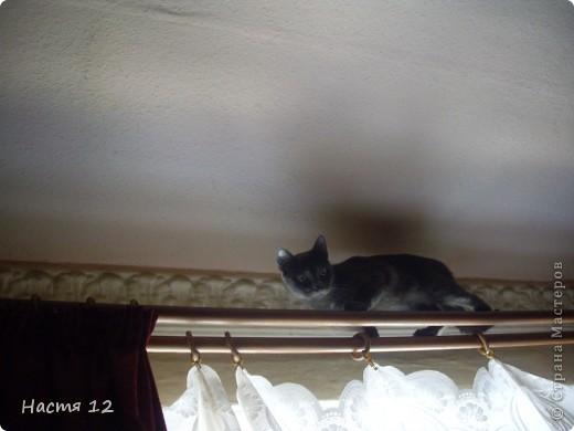 Это моя кошка Туся.Она любит прыгать ,бегать и скакать. фото 2