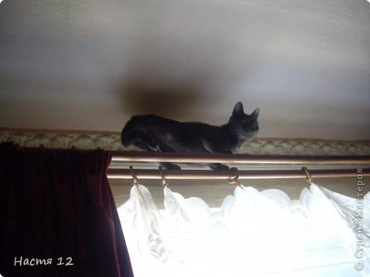 Это моя кошка Туся.Она любит прыгать ,бегать и скакать. фото 3