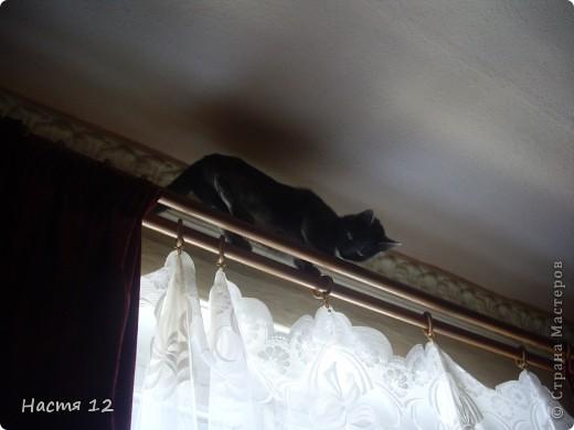 Это моя кошка Туся.Она любит прыгать ,бегать и скакать. фото 4