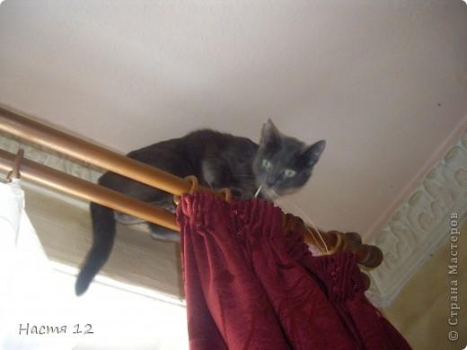 Это моя кошка Туся.Она любит прыгать ,бегать и скакать. фото 5