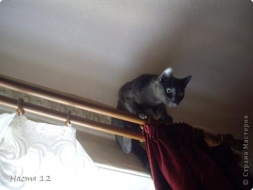 Это моя кошка Туся.Она любит прыгать ,бегать и скакать. фото 6