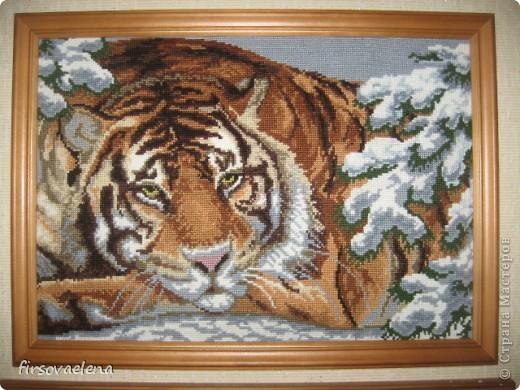 Тигр 2010