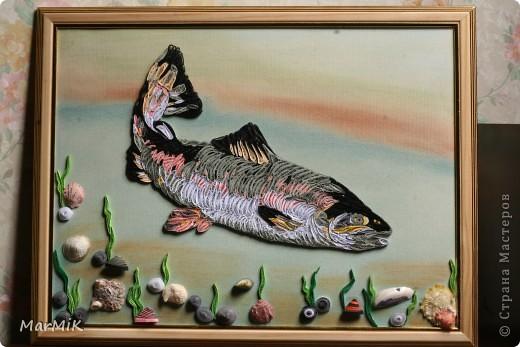 Рыбка с холодных морей фото 1