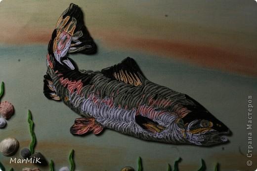 Рыбка с холодных морей фото 3