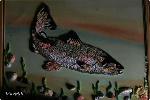 Рыбка с холодных морей фото 6