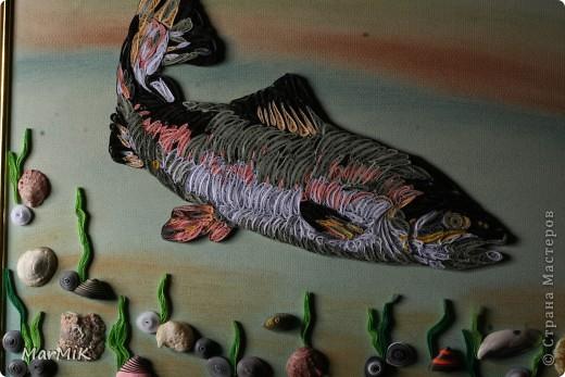 Рыбка с холодных морей фото 7