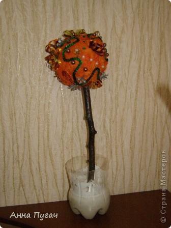 """Мой муж назвал его """"Апельсиновое дерево""""!!!! фото 2"""