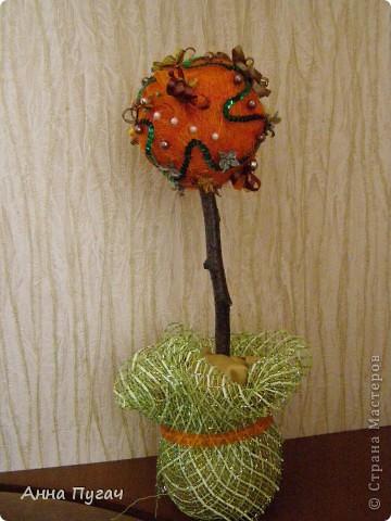 """Мой муж назвал его """"Апельсиновое дерево""""!!!! фото 1"""
