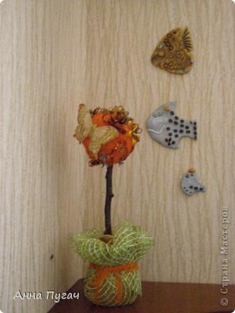 """Мой муж назвал его """"Апельсиновое дерево""""!!!! фото 7"""