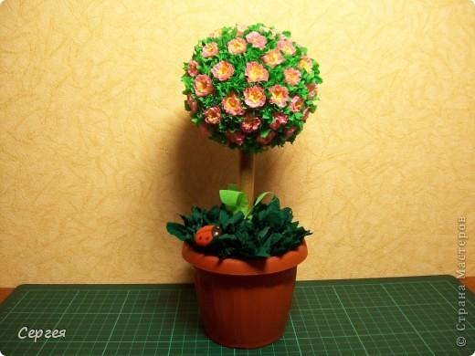 Европейское дерево радости. фото 1