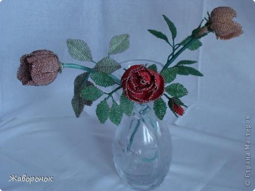 Семейство роз. Красненькая - самая корявая, она - первенец. фото 1