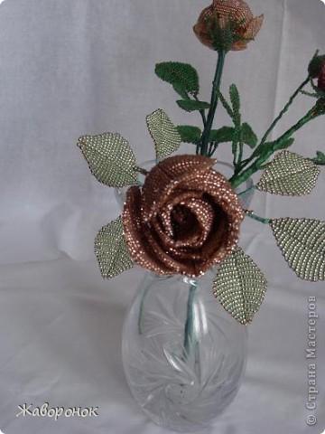 Семейство роз. Красненькая - самая корявая, она - первенец. фото 2