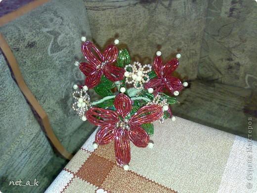 красные цветочки