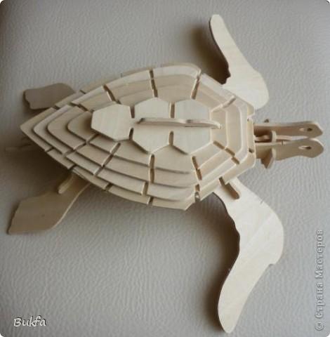 Дорогие мастерицы и мастера! Я, наконец-то пришла к концу серии фоторепортажей (ха-аха) о небольшой коллекции черепах, которую собирали мы всей семьюй. Если заинтересовались посмотрите раньше загруженные здесь: http://stranamasterov.ru/node/151515 http://stranamasterov.ru/node/151571 http://stranamasterov.ru/node/151613 http://stranamasterov.ru/node/152140 http://stranamasterov.ru/node/152480 http://stranamasterov.ru/node/152628  Закончить решила показом черепах самодельных. Таких тоже есть немножко. Надо бы расширить их ассортимент, да появилось другое увлечение - фигурки ангелов. Ну ладно хватит распинаться. Это сборная модель черепахи. Вот она-то самая большая в доме. Опять моя любимая водяная. Собирал сын, он тогда в школе учился. Конечноиз покупного набора. Но все-таки поделка. Или нет? фото 1