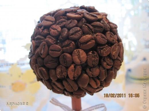 Наверное у всех уже есть кофейное деревце, а у меня вот только созрело. Высота его вместе с горшочком 17 см. фото 2