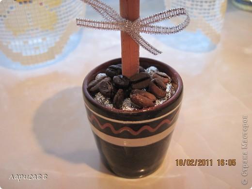 Наверное у всех уже есть кофейное деревце, а у меня вот только созрело. Высота его вместе с горшочком 17 см. фото 3