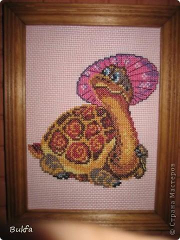 Дорогие мастерицы и мастера! Я, наконец-то пришла к концу серии фоторепортажей (ха-аха) о небольшой коллекции черепах, которую собирали мы всей семьюй. Если заинтересовались посмотрите раньше загруженные здесь: http://stranamasterov.ru/node/151515 http://stranamasterov.ru/node/151571 http://stranamasterov.ru/node/151613 http://stranamasterov.ru/node/152140 http://stranamasterov.ru/node/152480 http://stranamasterov.ru/node/152628  Закончить решила показом черепах самодельных. Таких тоже есть немножко. Надо бы расширить их ассортимент, да появилось другое увлечение - фигурки ангелов. Ну ладно хватит распинаться. Это сборная модель черепахи. Вот она-то самая большая в доме. Опять моя любимая водяная. Собирал сын, он тогда в школе учился. Конечноиз покупного набора. Но все-таки поделка. Или нет? фото 4