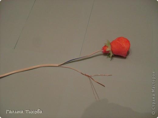 Мастер-класс Поделка изделие 8 марта Моделирование конструирование Мастер-класс «Розы из ватных косметических дисков» Диски ватные Материал бросовый фото 7