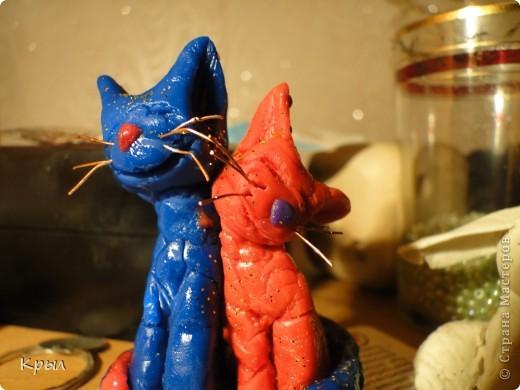 Веселые коты фото 4
