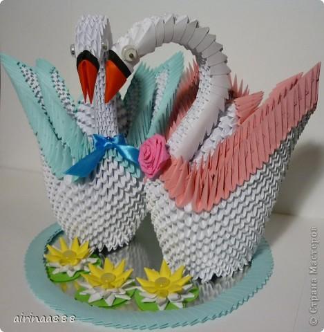 Лебедь фото 7