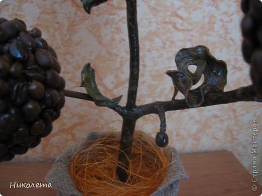 Обожаю кофе, наконец-то сделала  своё деревце!!!! фото 2