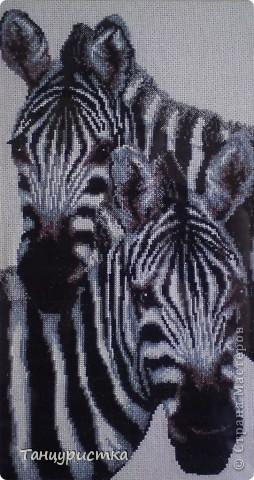 """""""Две зебры"""""""