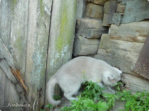 Давайте познакомимся! Меня зовут  Шер-р-ри! Шер-р-р! Видимо, мои хозяева мечтали о собаке, вот  отсюда и имя...прямо надо сказать...не совсем кошачье, но я уже привыкла. фото 15