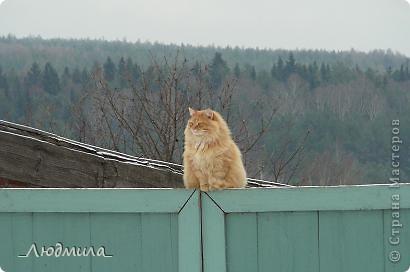 Давайте познакомимся! Меня зовут  Шер-р-ри! Шер-р-р! Видимо, мои хозяева мечтали о собаке, вот  отсюда и имя...прямо надо сказать...не совсем кошачье, но я уже привыкла. фото 25