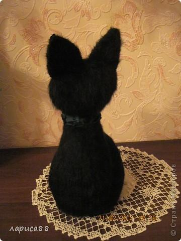 Здравствуйте, я Чернушка, кошечка-девочка. фото 3
