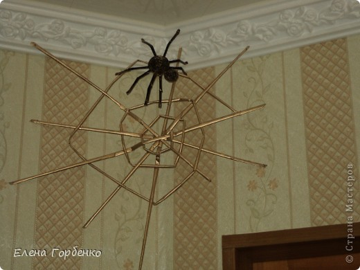 Паук с паутиной заняли свой угол фото 1