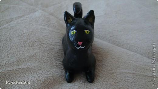 Черный черный кот! фото 1