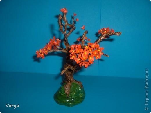 Дерево. фото 2