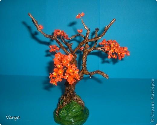 Дерево. фото 3