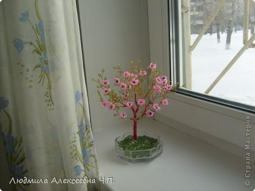 Весеннее деревце фото 2