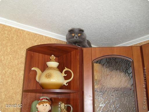 Давайте знакомиться. Я шотландский вислоухий кот. Зовут меня Баскервиль – это для солидности. Дома, просто Бася. Мне всего 3 года.  фото 11