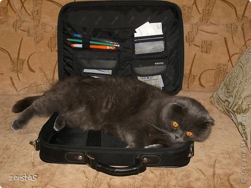 Давайте знакомиться. Я шотландский вислоухий кот. Зовут меня Баскервиль – это для солидности. Дома, просто Бася. Мне всего 3 года.  фото 13
