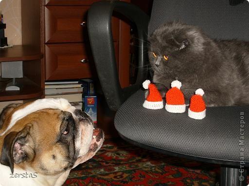 Давайте знакомиться. Я шотландский вислоухий кот. Зовут меня Баскервиль – это для солидности. Дома, просто Бася. Мне всего 3 года.  фото 15