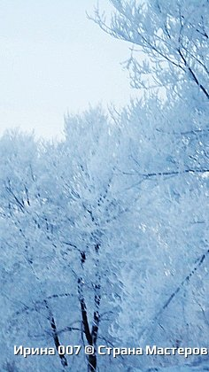 После оттепели веточки деревьев покрылись инеем. Красотища! фото 2