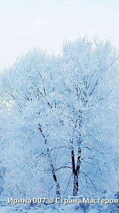 После оттепели веточки деревьев покрылись инеем. Красотища! фото 1