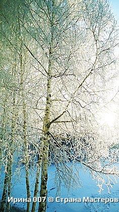 После оттепели веточки деревьев покрылись инеем. Красотища! фото 3